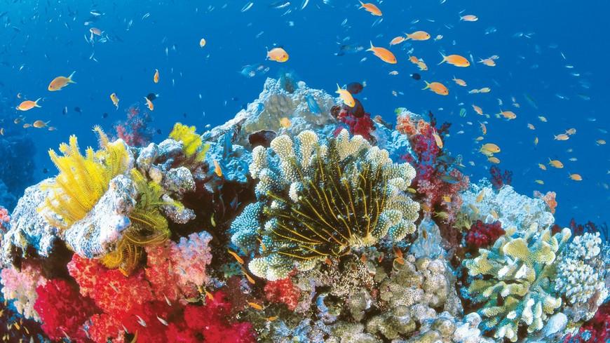 5 Wonders of The Underwater World That Will Leave You Breathless  5 Wonders of The Underwater World That Will Leave You Breathless 5 Wonders of The Underwater World That Will Leave You Breathless 5